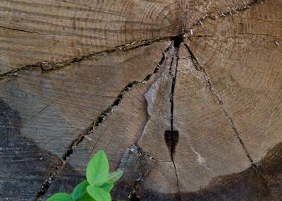 Corazón de madera - Egurrezko biotza